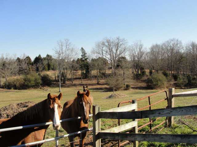 14 Acre Horse Property With Stable And Arena