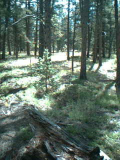 200 Acres For Only $20,000.00