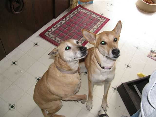 Help Jessie And Callie! Foreclosure Family Needs To Get Dogs Out!