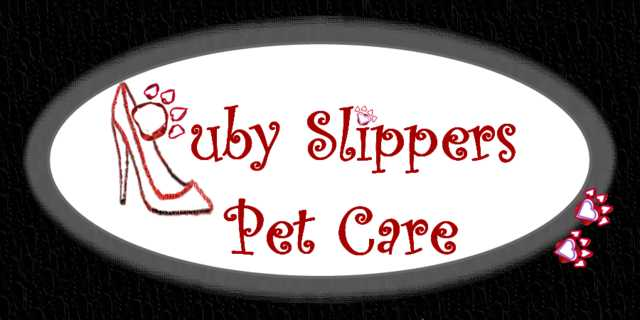 Special Pet Care In Your Home
