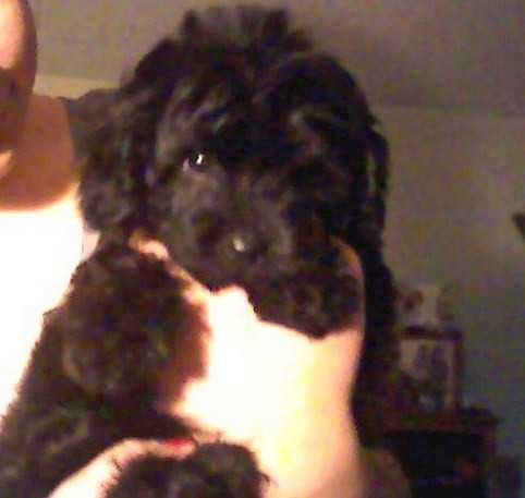 I Lost My Poodle Terrier Mix 3 / 08 / 10