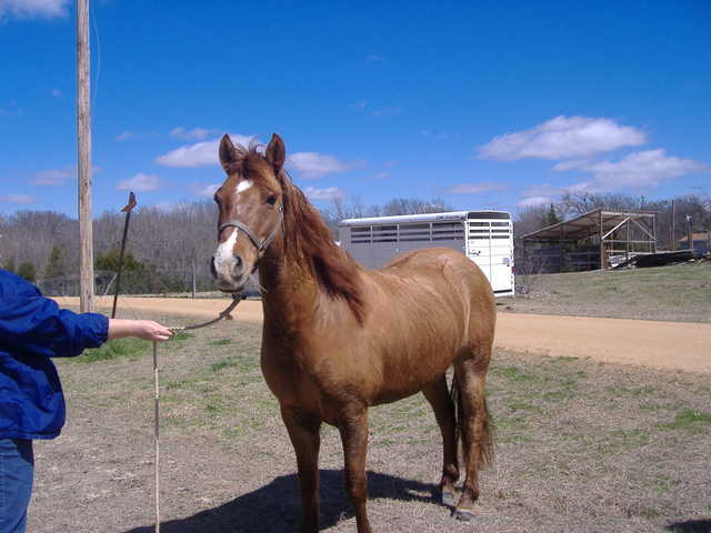Beautiful 11yr Old Dun Quarter Horse - $2500 Obo
