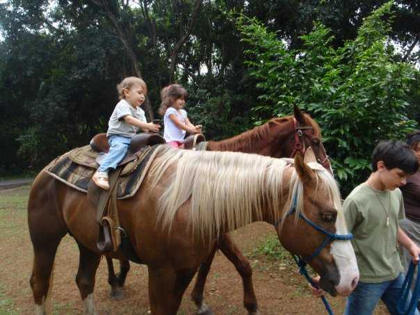 Basic Horsemanship And Riding Lessons