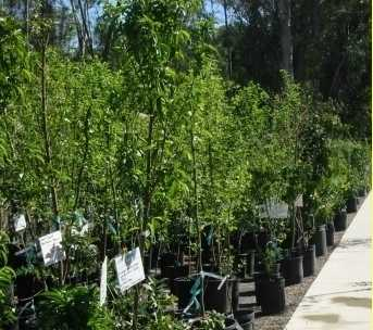 Monteagudo Fruit Trees & Landscaping Services
