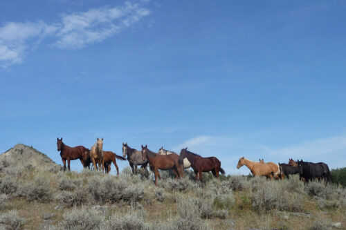 Brood Mares, Yearlings And 2yr Old Quarter Horses For Sale