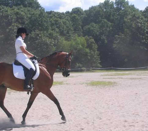 Equine / Horse Training And Exercise