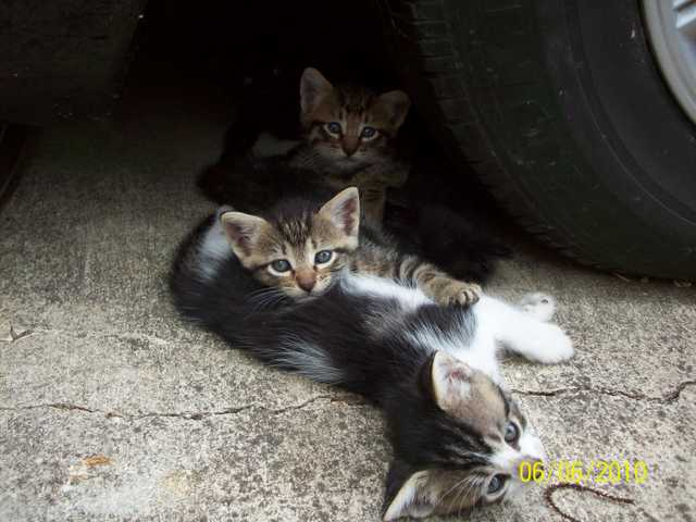 Kittens Need A Loving Home