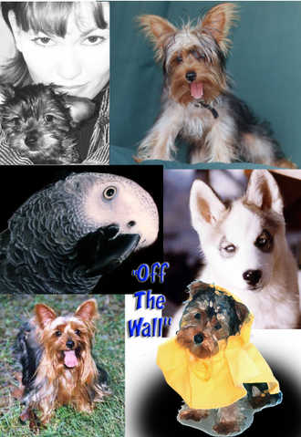 Off The Wall ~ Creative Photography ~ Specials! $80