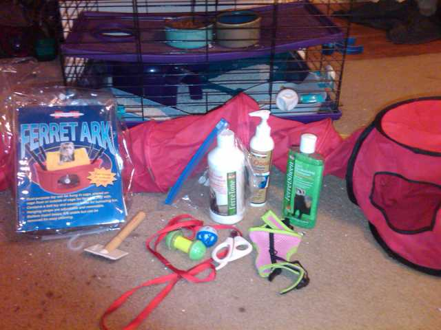 3 Ferrets With Cage And Supplies