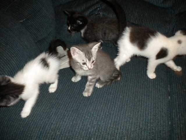 Kittens Need Good Home