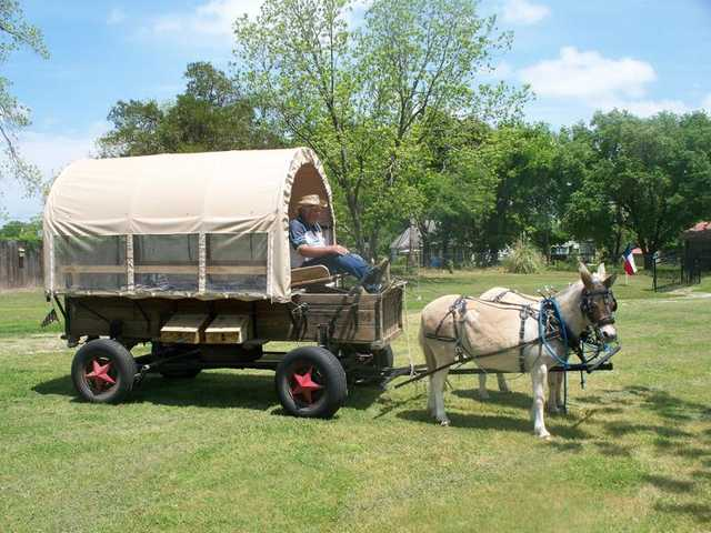 Mini Mules And Wagon For Sale