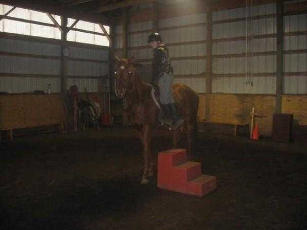 Need A Equine Trainer Or Want Riding Lessons?