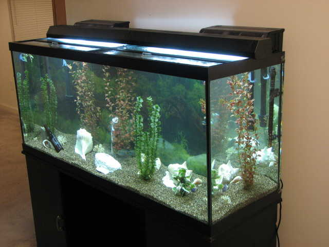 120 Gallon Fish Tank Waynseville