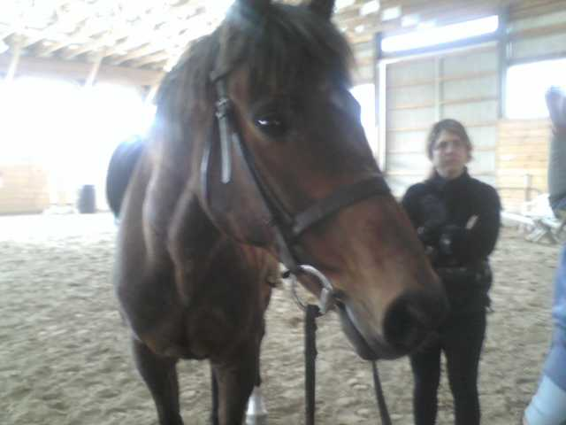 17 Year Old Thoroughbred Geld. $300 O. B. O