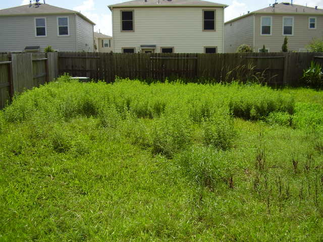 Overgrown Lawn Cuts