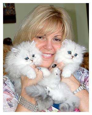 Stunning Home Raised Persian Kittens For Re Homing - 3 Months Old