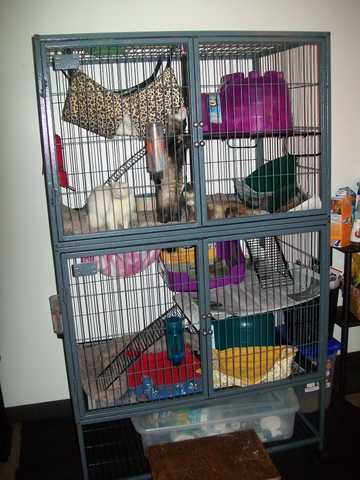 3 Ferrets, Cage And Accessories