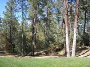 79,900 1 / 2 Acre Cool Pines Payson Az Owner Will Carry $995 Down