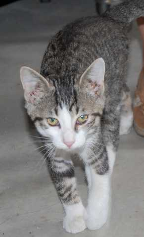 4 Month Old Kittens Need Good Home
