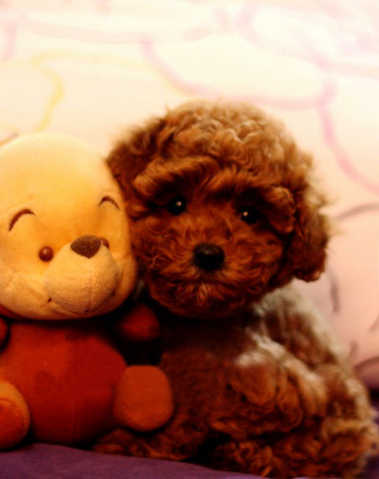 - Teddy Bear - л╘╣ох╝