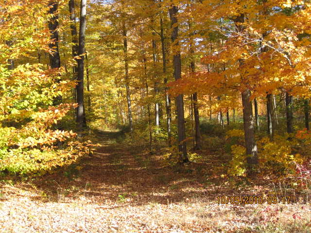 Prime 5.59 Acre Wooded Lot