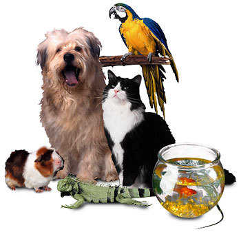 Loving Pet Sitter Available!