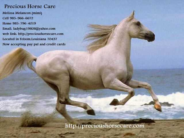Barn Sitting And Horse Care
