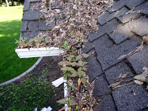 Need Gutter Cleaning?
