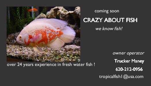 Crazy About Fish Coming Soon !