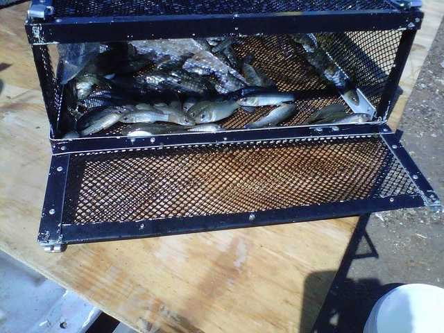 Free fishing bait new houston web for Wade fishing caddy