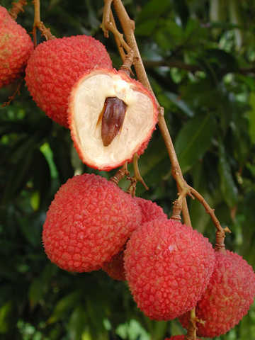 Lychees, Organic, Fresh Picked Daily!