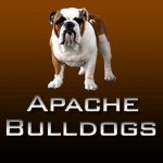 English Bulldog Stud Service