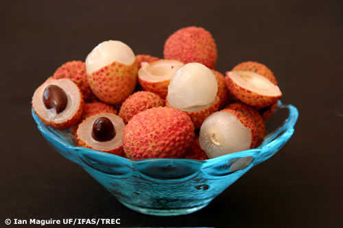 Organic Lychee Fruit Available Now! Longans Available!
