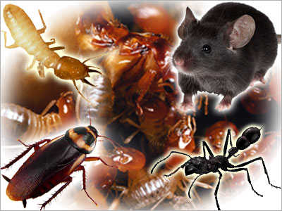 Pest Control=roach & Ants Problem? $40 Month Or $50 Anytime!