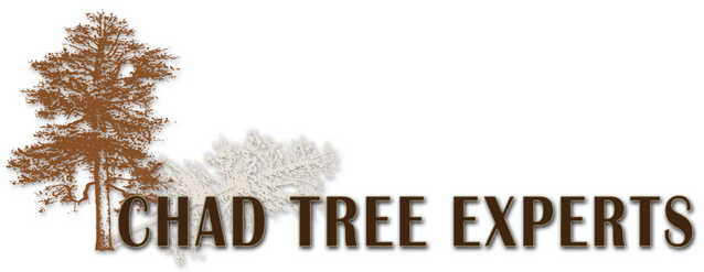 Chad Tree Experts! Great Quality And Affordable Price!