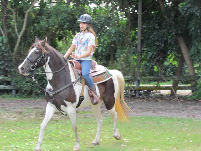 Registered Tennessee Walker, Spotted Saddle