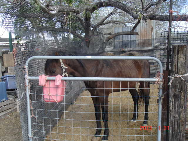 Horse Stalls For Rent
