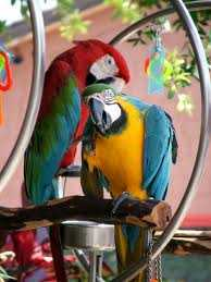 We Have Well Trained Lovely Talking Macaw Birds Available To Lo