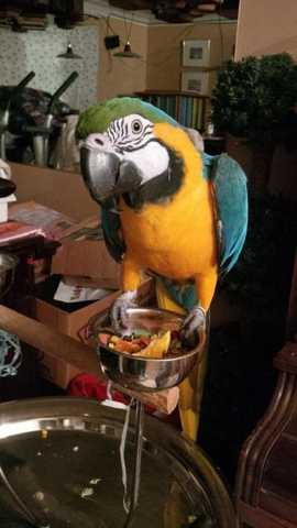 Adorable Macaw Parrots Available