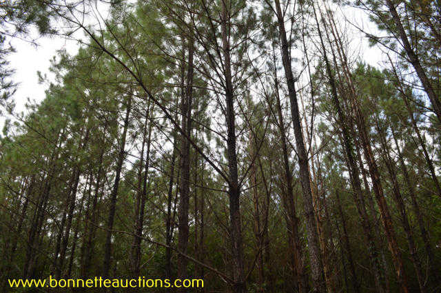Pearl River County Timberland For Sale At Auction