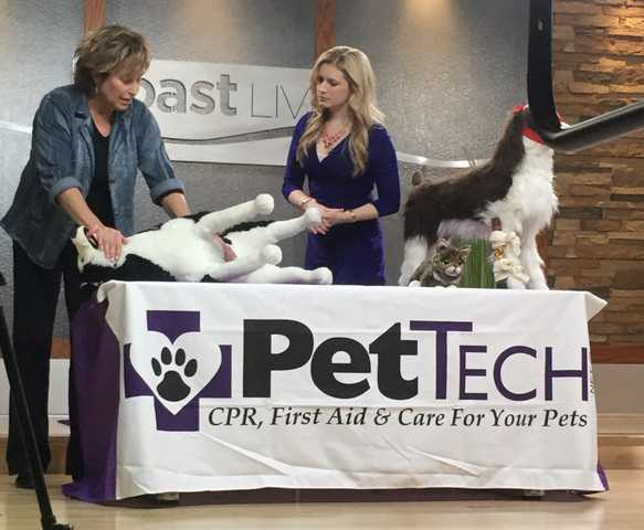 Pettech Petsaver Cpr And First Aid Classes For Dogs And Cats