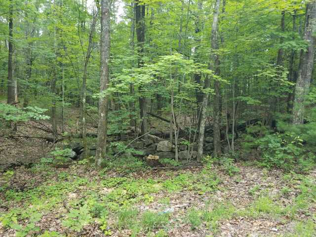 Wooded Lot In Alfred Me